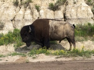 (VUSA) Day 25: T.R. National Park